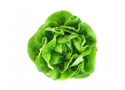 Salát hlávkový zelený 1 ks